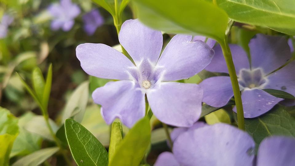 Flowers, Petals, Leaves, Foliage, Bush, Flora, Botany