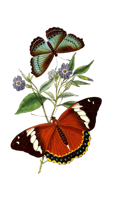 Butterflies, Flowers, Cutout, Nature, Flora, Insects