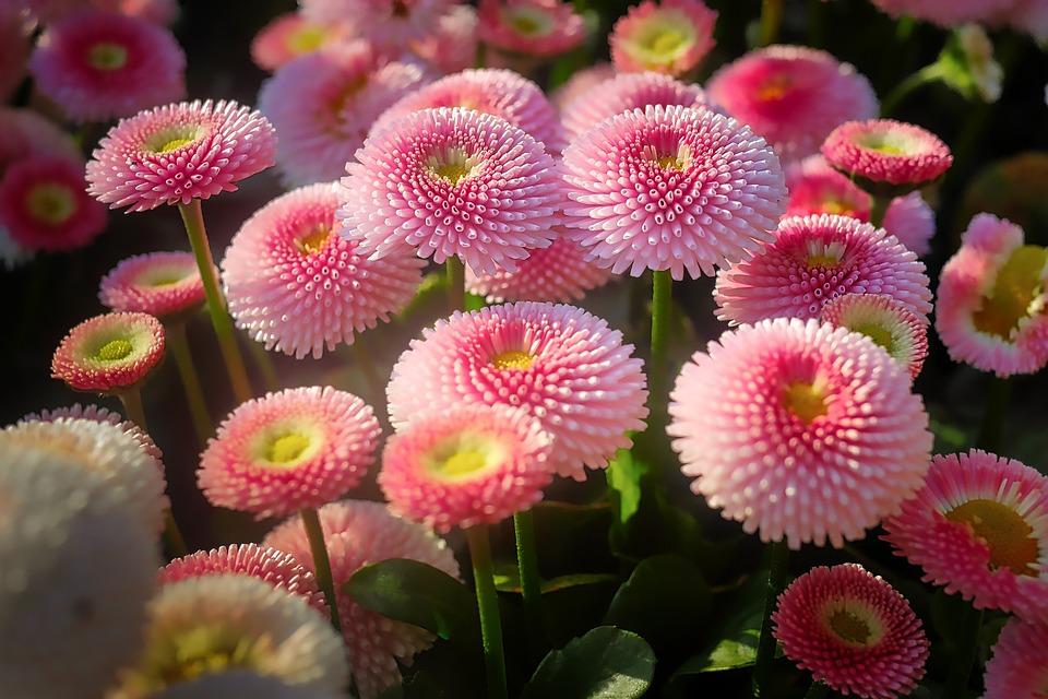 Flower, Nature, Plant, Garden, Floral, Flowers, Close