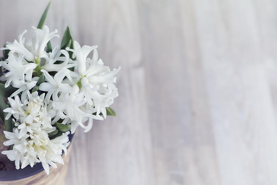 Flower, White, Flowers, Fragrant Flower, Plant