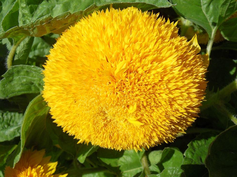Flower, Knirps, Flowers