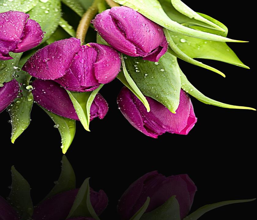 Flower, Plant, Garden, Leaf, Nature, Flowers