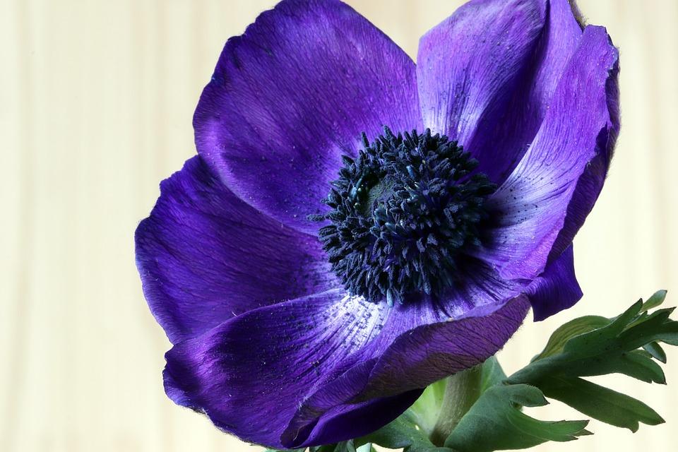 Flowers, Beauty, Nature, Plants, Petal, Floral, Flower