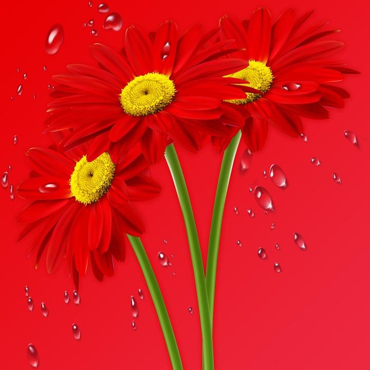 Nature, Margarita Red, Daisy, Flowers, Flower, Red