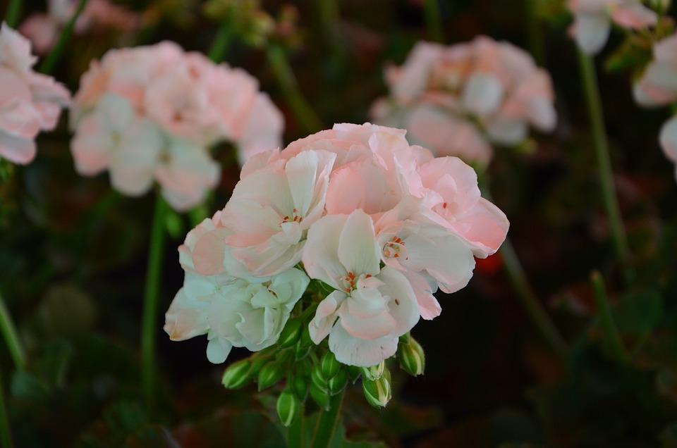 White, Flower, Flowers