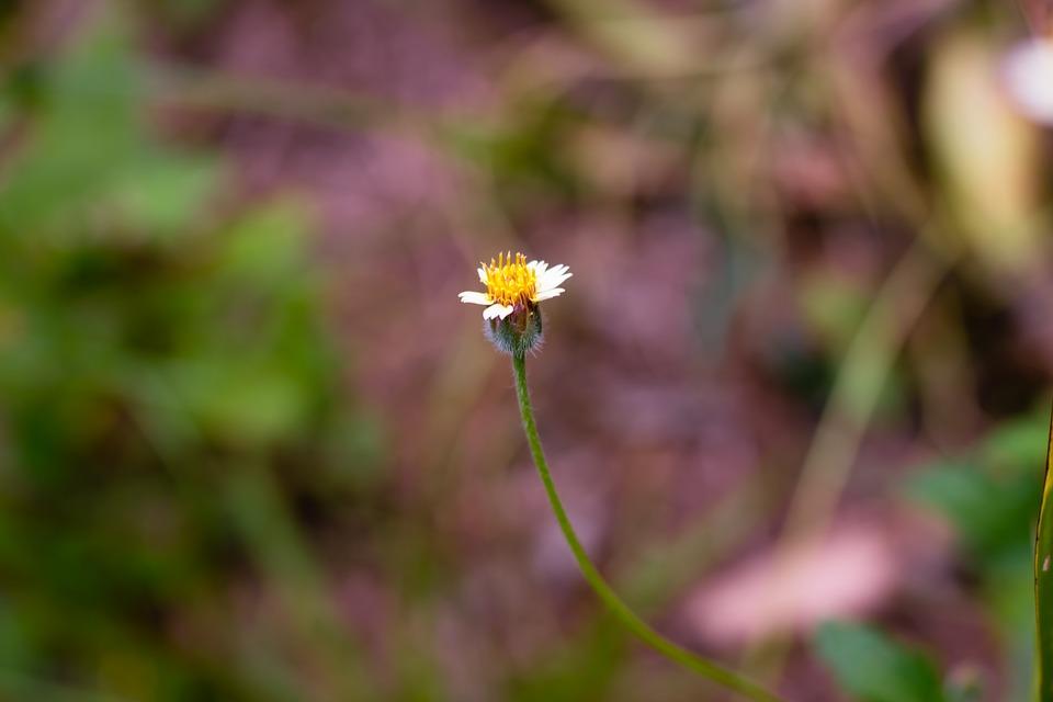 Flowering Grass, Plant, Flowers, Nature, Summer