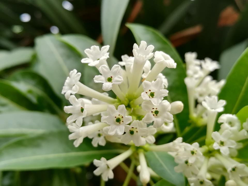 Flowers, White, Flowering Night