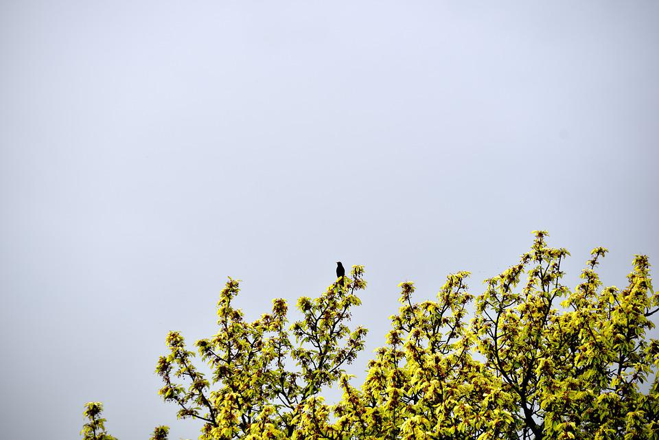 Nature, Bird, Flowers, Flying, Plumage, Background