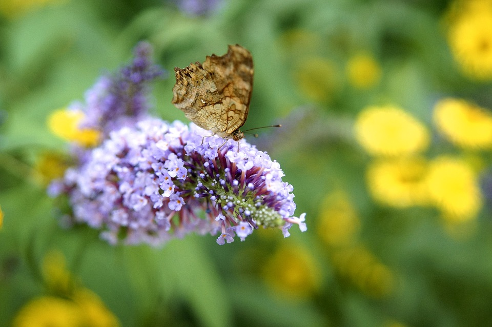 Flowers, Butterfly, Nature, Forest, Insects