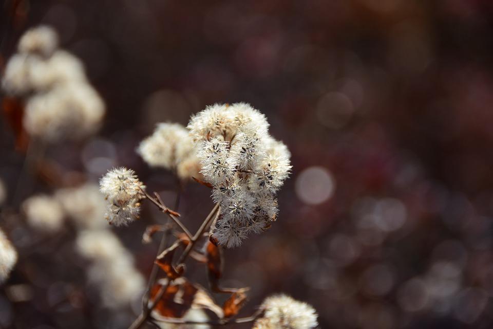 Flowers, Winter, Gapyeong