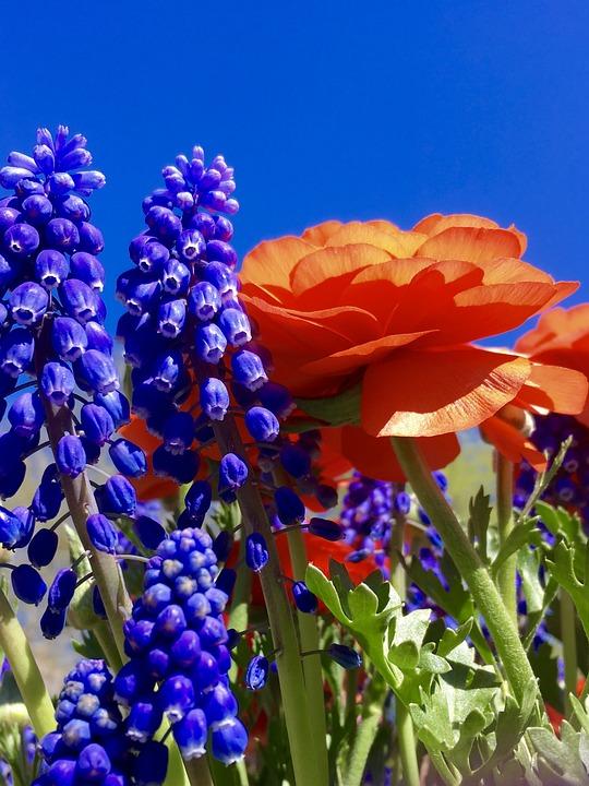 Flowers, Spring, Bulb, Orange, Garden, Bloom, Floral
