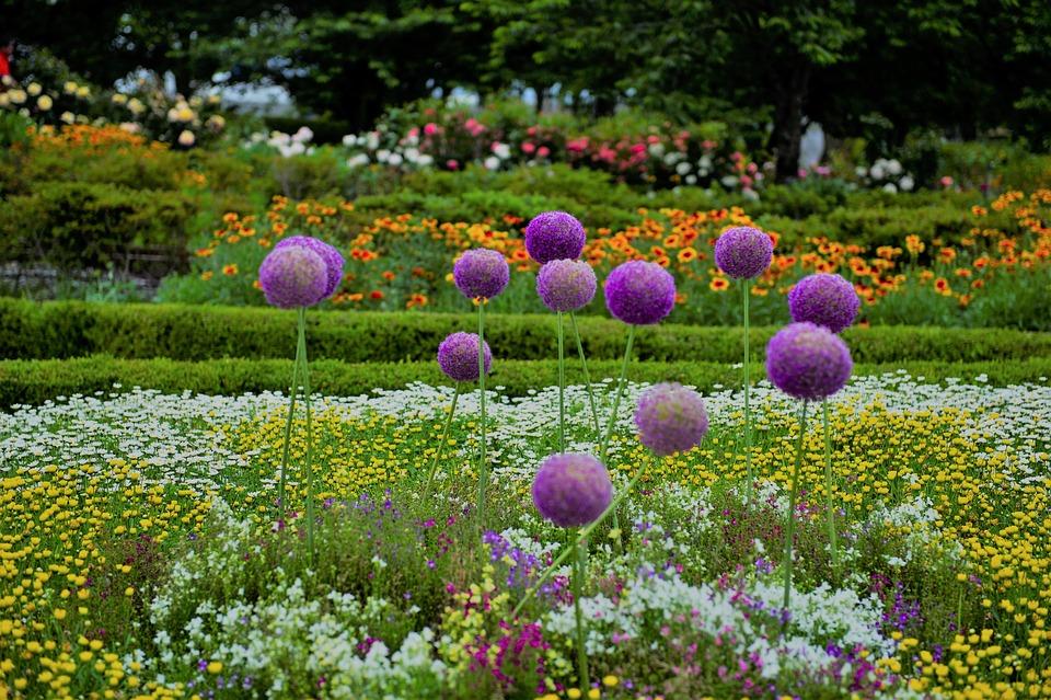 Flowers, Flower Garden, Garden