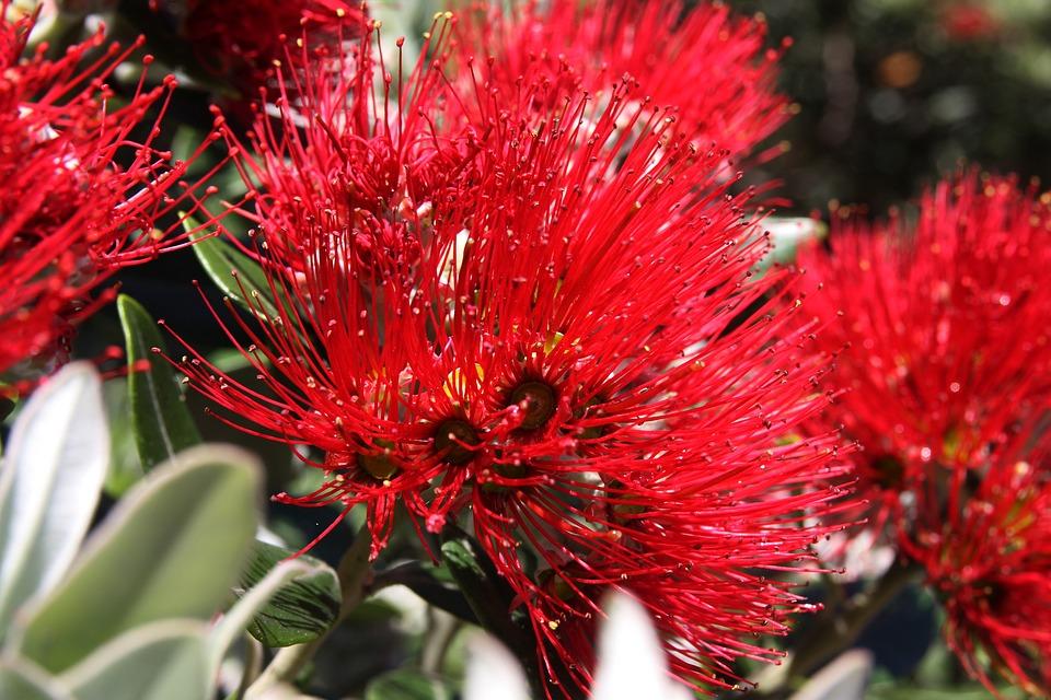 Flower, Plant, Nature, Flowers, Garden, New Zealand