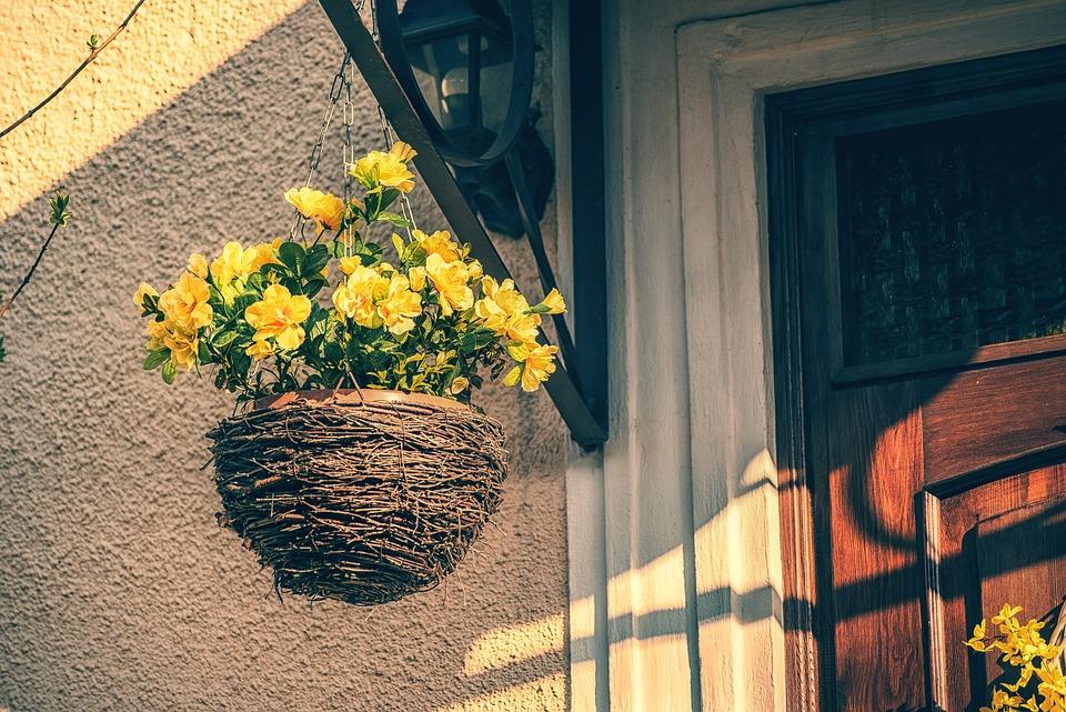 Decorative, Garden, Plant, Flowers, Pot, Outdoor