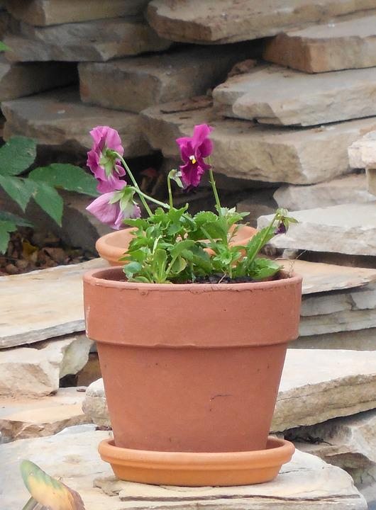 Clay Pot, Flowers, Clay, Pot, Pottery, Plant, Garden