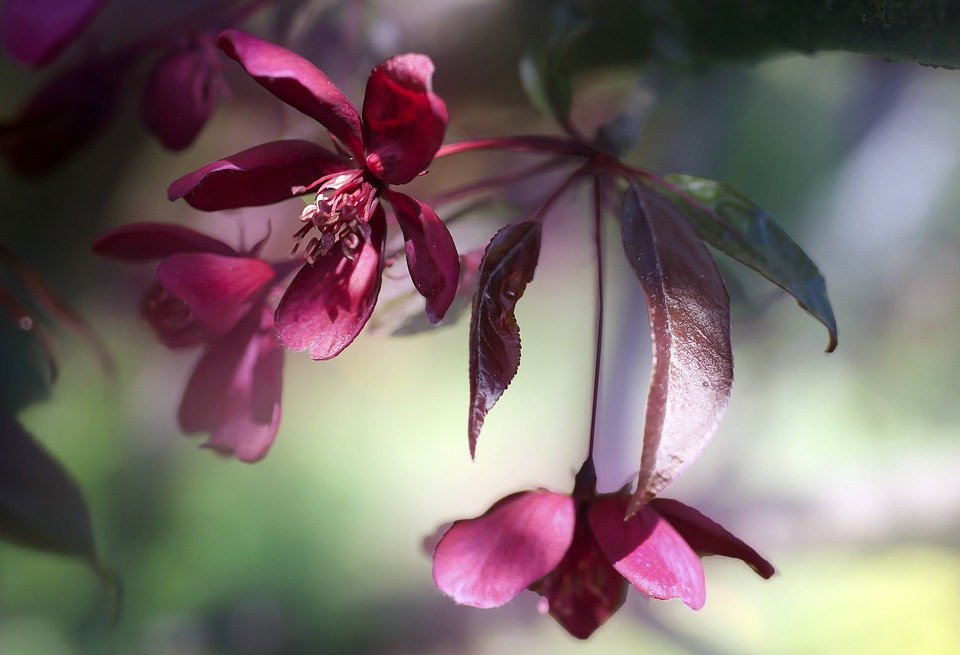 Flower, Flowers, Spring, Pink, Paradise Tree, Garden