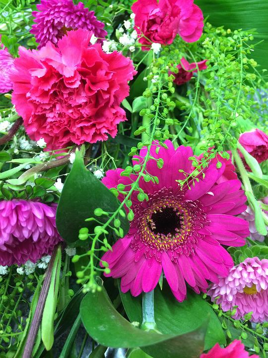 Flowers, Gerbera, Daisy, Bright, Floral, Natural, Pink