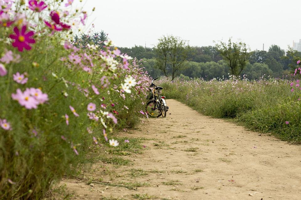 Bike, Flowers, Gil