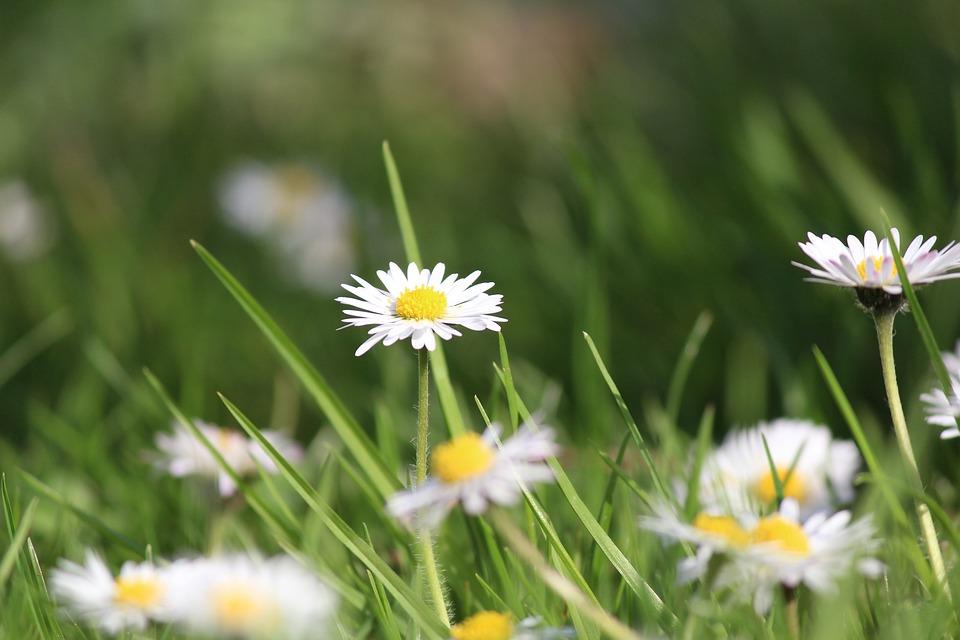 Spring, Flowers, Meadow, Grass, Summer