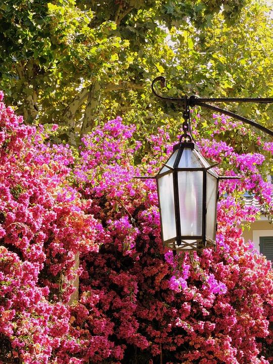 Lamp, Flowers, Green, Nature, Leaves, Bloom