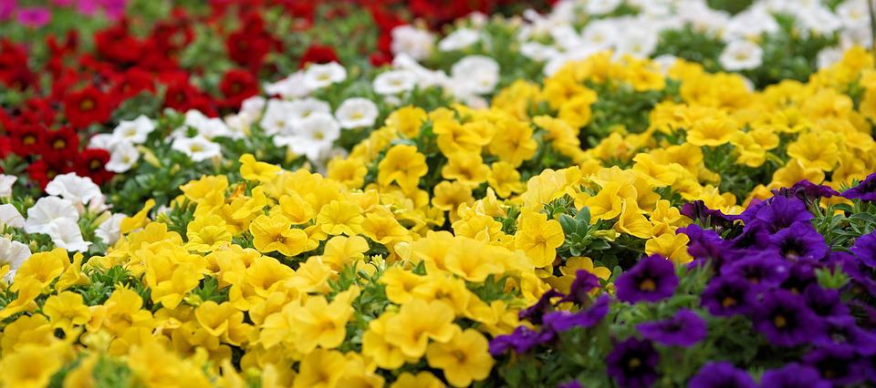 Free photo flowers grow plant flora nature red yellow max pixel flowers plant nature yellow red flora grow mightylinksfo