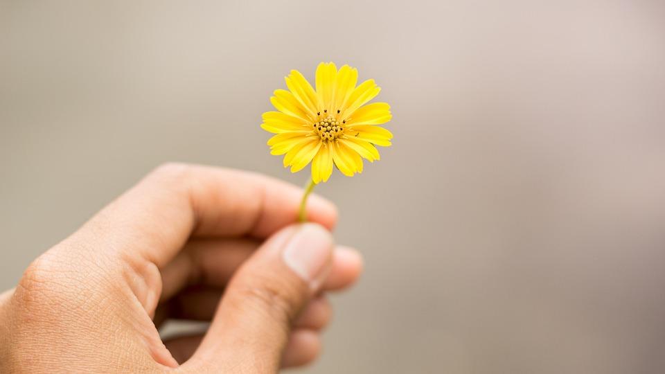 Free photo flowers hand holding flowers yellow flowers max pixel yellow flowers flowers hand holding flowers mightylinksfo