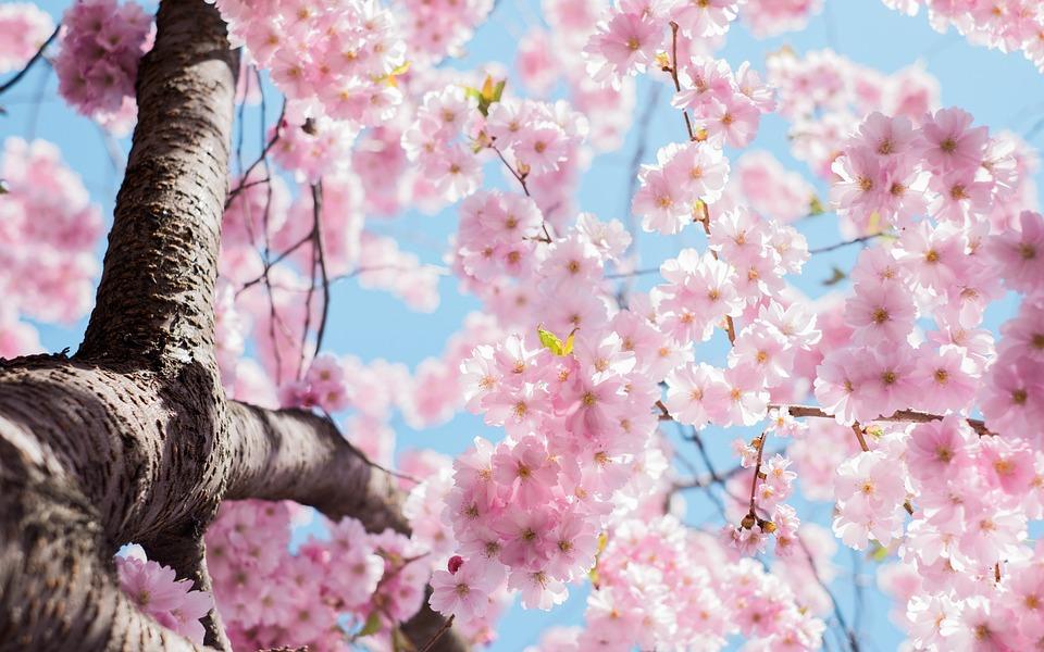 Bloom, Blossom, Flora, Flowers, Hd Wallpaper, Nature