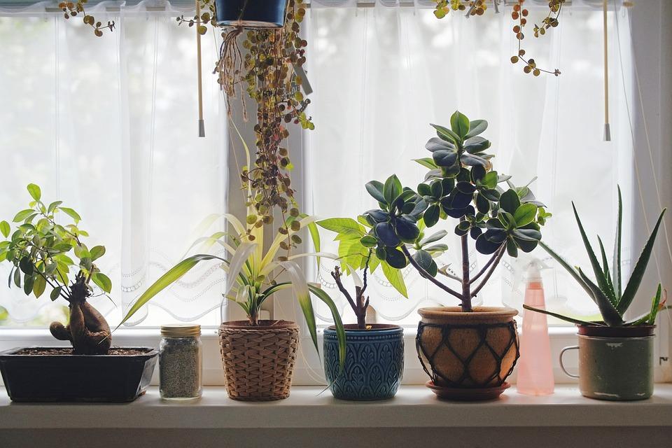 Flowers, Window, House, Vase, Design, Deco, Plant