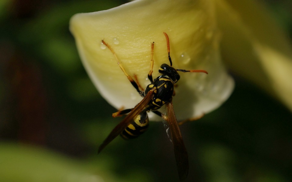 Flora, Fauna, Flowers, Macro, Insect