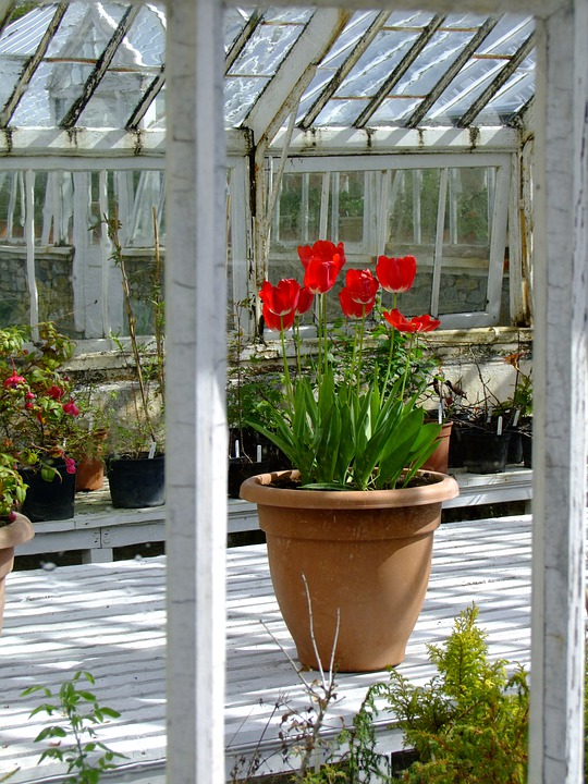 Ireland, Greenhouses, Old, Birr, Abandoned, Flowers