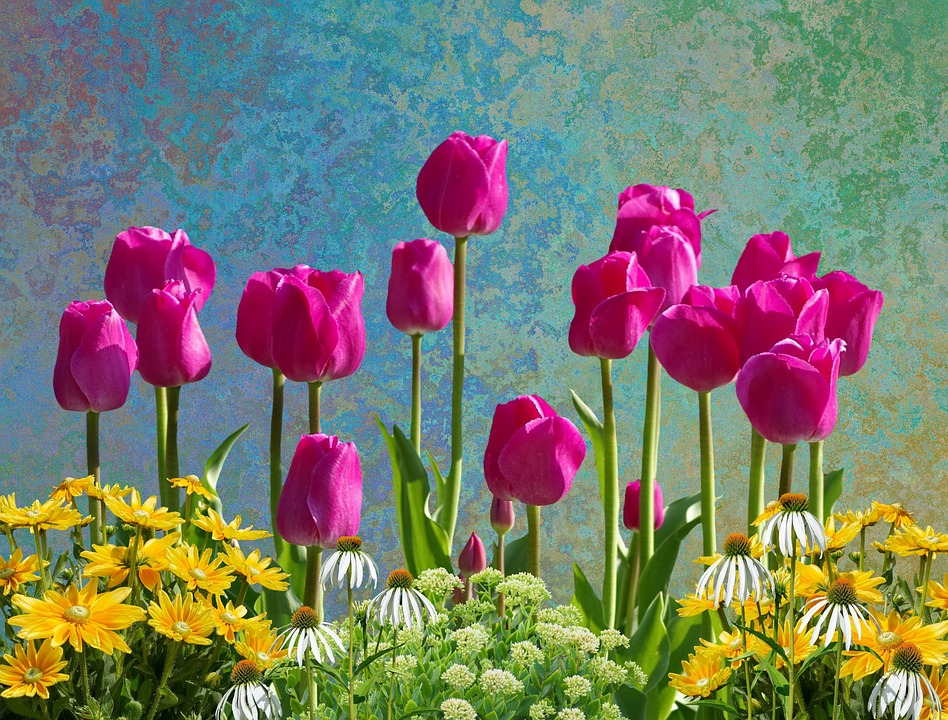 Free photo flowers isolated spring spring flowers tulips max pixel tulips flowers spring spring flowers isolated mightylinksfo