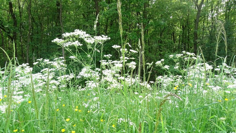 Flowers Field, Nature, Flowers, Landscape, Plants