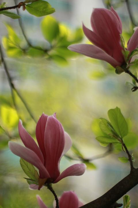 Flowers, Plants, Nature, Leaf, Garden, Spring Flowers