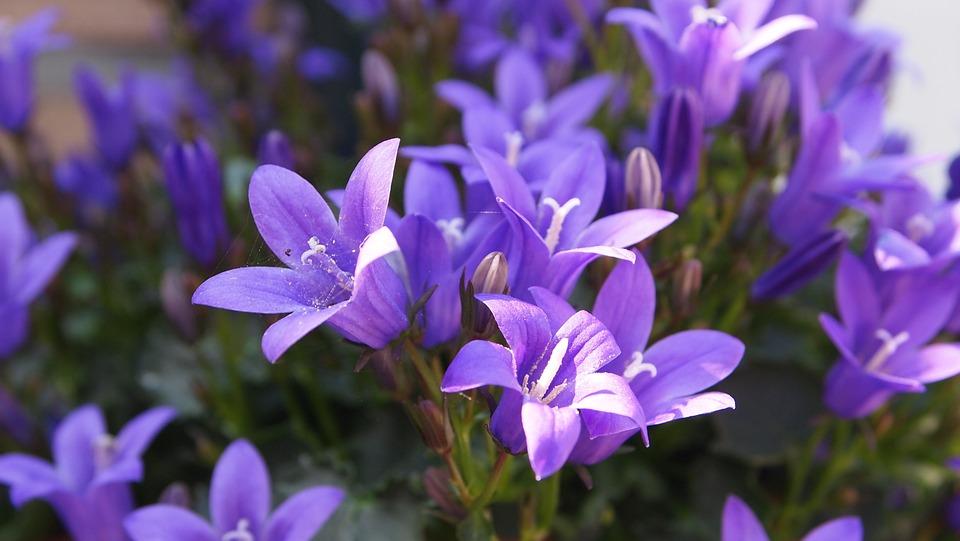 Flowers, Flower, Small, Purple, Lilac, Sunlight, Sun