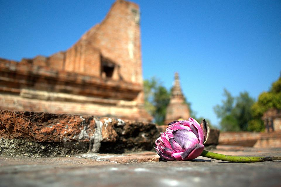 Lotus, Flowers, Nature, Pink, Flower