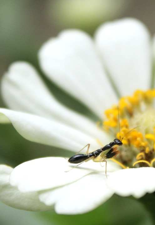 Insects, Animals, Flowers, Macro, Nature
