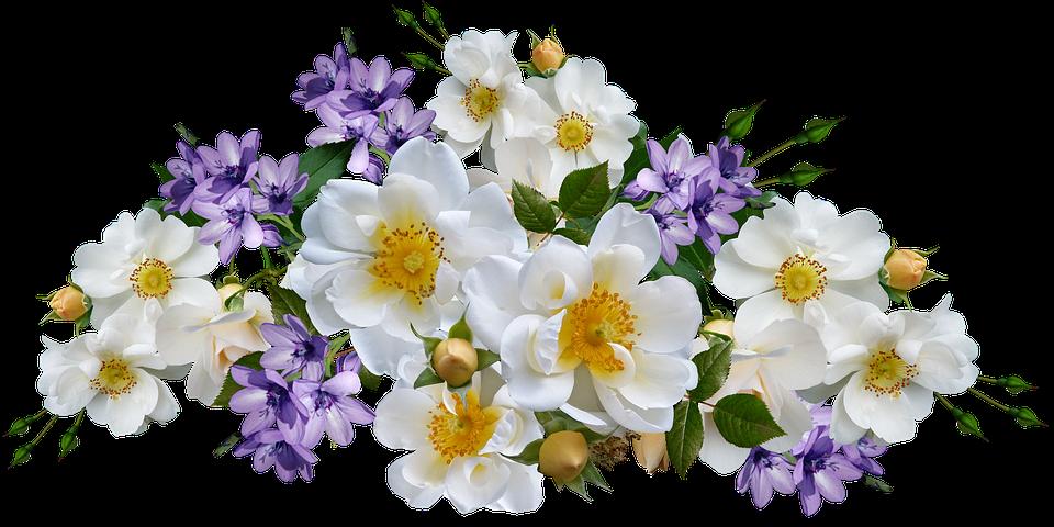 Flowers, Roses, White, Mauve Babianas, Isolated