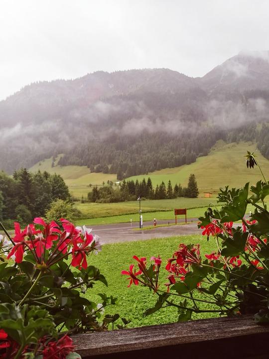 Tyrol, Flowers, Austria, Alps, Living Nature, Mountains