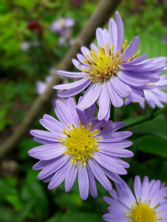 Flores, Flowers, Floral, Natural
