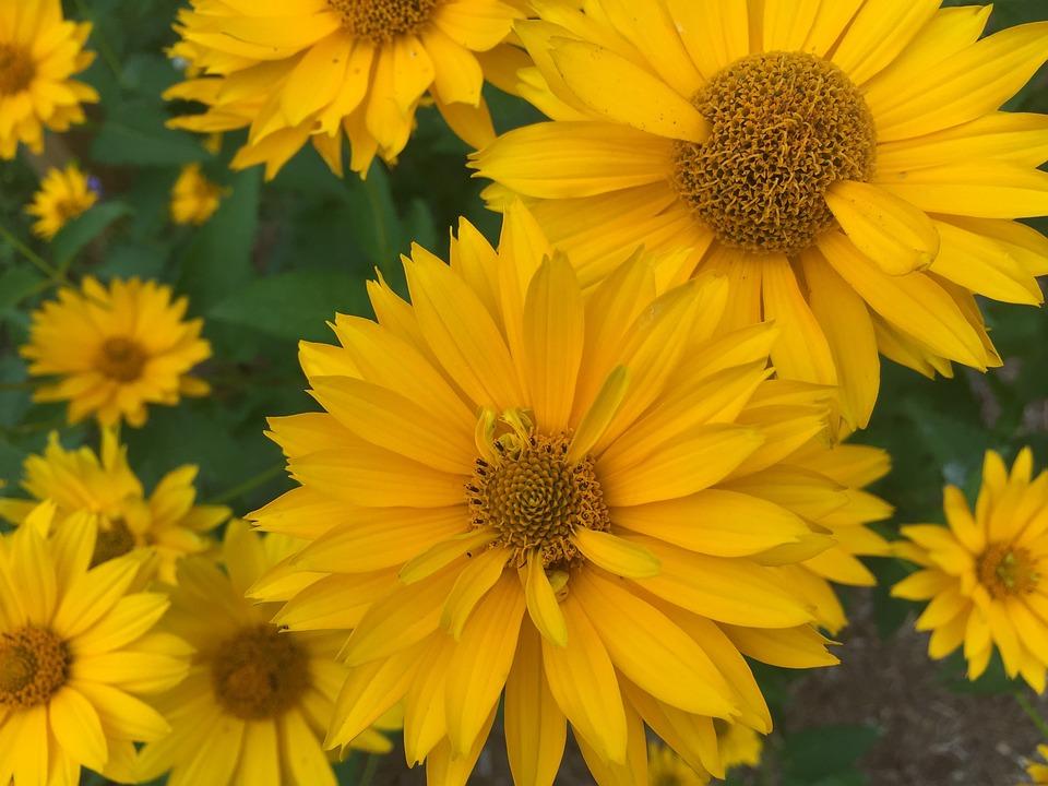 Flowers, Yellow, Petals, Nature, Beautiful