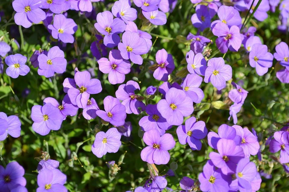 Pillow, Flowers, Blue, Garden, Plant, Nature