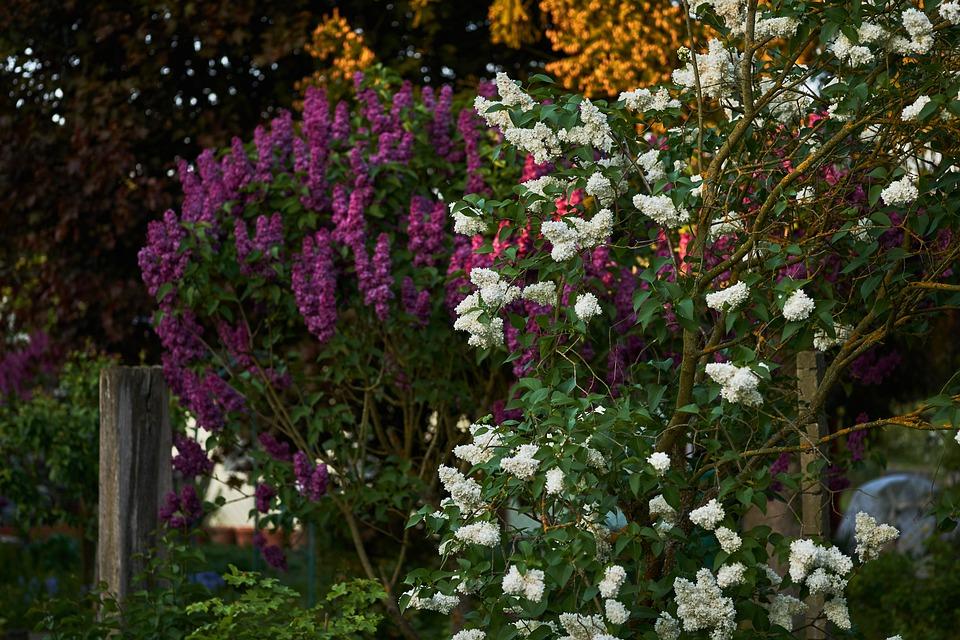 Flower, Plant, Garden, Nature, Flowers, Tree, Leaf