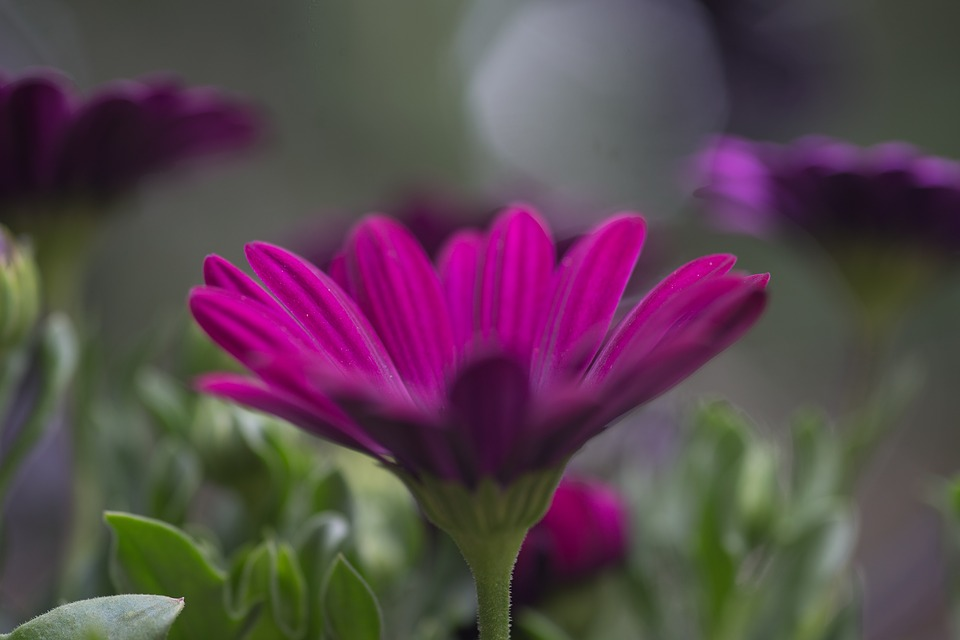 Flowers, Garden, Nature