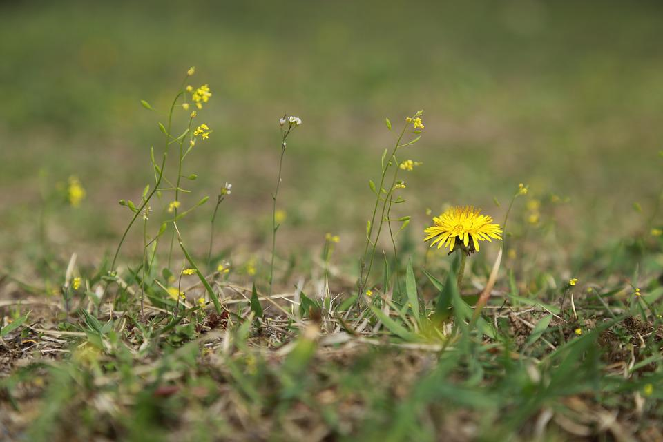 Nature, Grass, Hayfields, Flowers, Outdoors, Plants