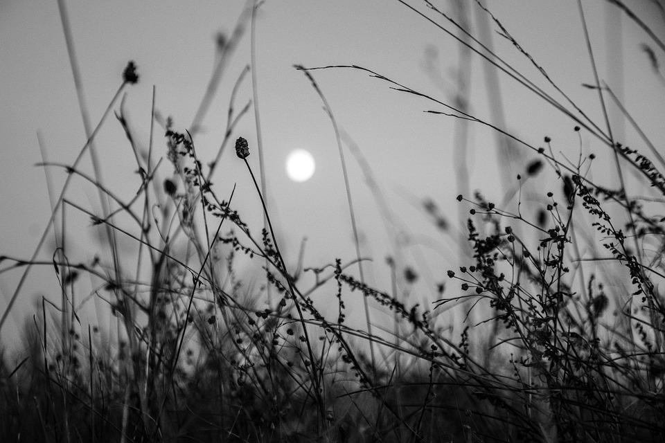 Moon, Flowers, Nature, Night