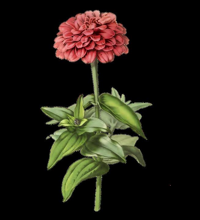 Flowers, Pink, Vintage, Nature, Plant, Flora, Colorful