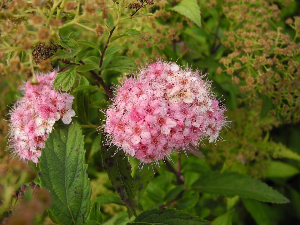 Flowers, Rose Petals, Shades Of Pink, Macro, Nature