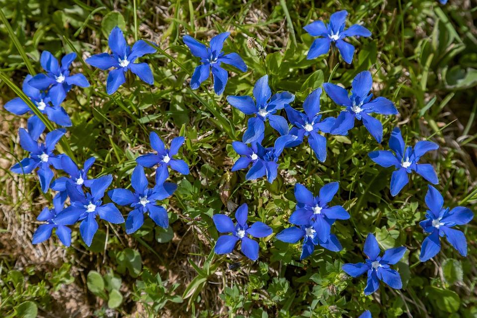 Flowers, Blue, Nature, Spring, Close Up