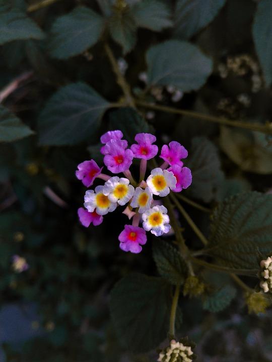 Flowers, Flora, Wildflower, Greenery, Moody, Nature
