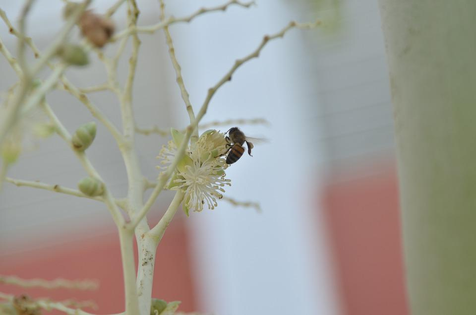 Flowers, Bees, Nectar
